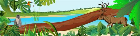vector rainforest jungle scene with differend animals Ilustracja