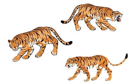 Set of vector tigers isolated on white, colorfull.