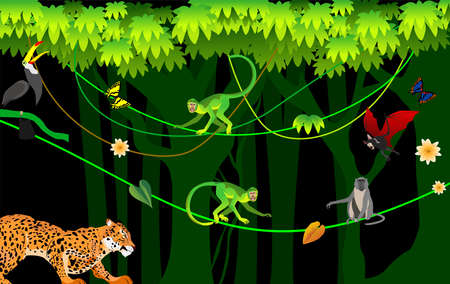 Jungle scene,  monkeys plays on lians, green folliage frame, night junle, vector template Illustration