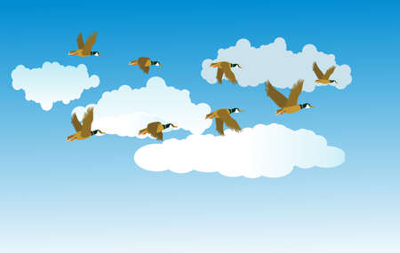 migratory birds fly in the clouds, vector