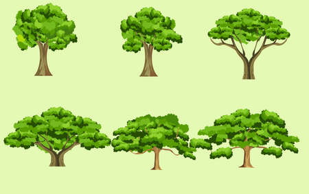 Trees set isolated on white background vector