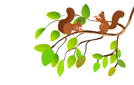 Two squirrel on sitts on tree branch, isolated on white vector illustration