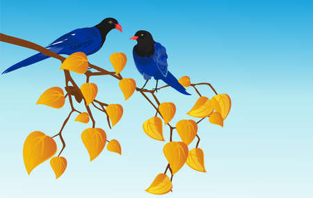 Blue color birds sitts on tree branch, blue background, vector