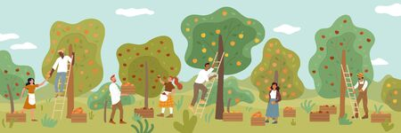 Multiracial people gathering fruit harvest in summer garden. Men, women, farmers picking ripe apples, oranges, tangerines from trees using ladders, collecting to wooden boxes vector flat illustration.