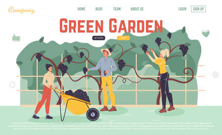 Fresh product from green garden. People farmer worker picking grapes harvesting berry for sale at farm market. Online service for order ecological food. Eat local concept. Landing page design template