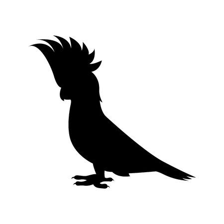 Vector image of a black cockatoo parrot on an isolated white background