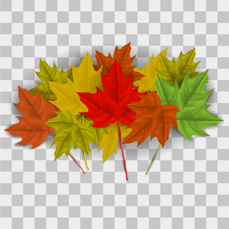 Vector image of realistic, autumn maple leaves on a transparent background