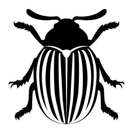 Vector image of the Colorado beetle silhouette on a white background