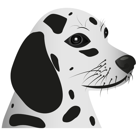 Picture of the head of the dog. A dog with a spotty color. Dalmatian