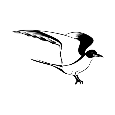 Vector image of a seagull bird with wings of black and white on an isolated white background