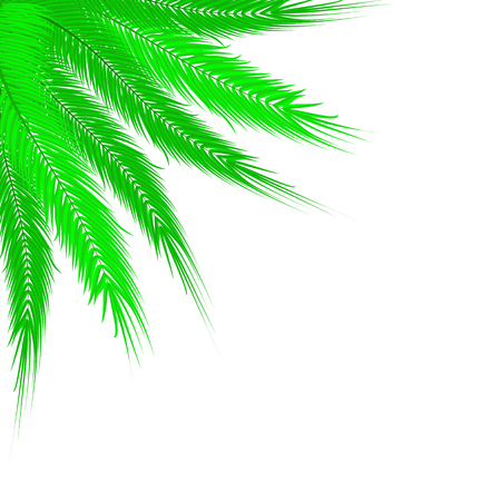Vector image of realistic palm branches on an isolated white background