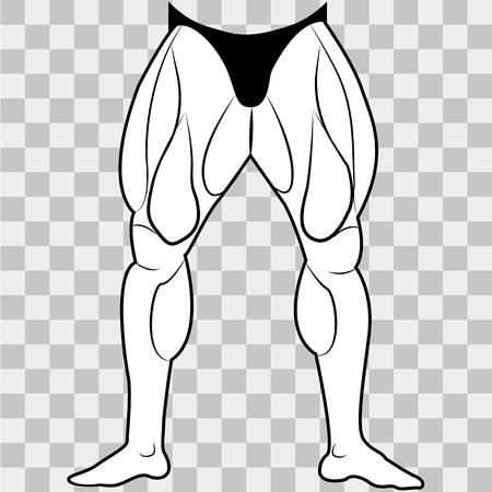 Hombre de la parte inferior del cuerpo de la imagen del vector. Los músculos de las piernas sobre un fondo transparente.