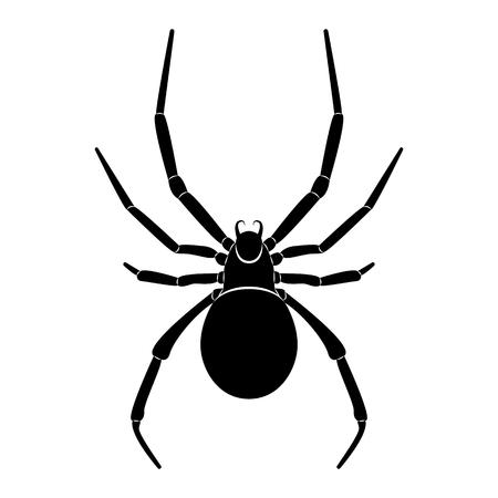 Vektorbild der Spinnensilhouette