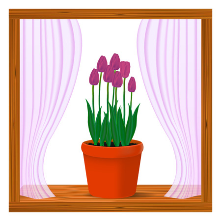Vector, realistic image of pink flowers of tulips in a pot in the window on the window sill Illustration