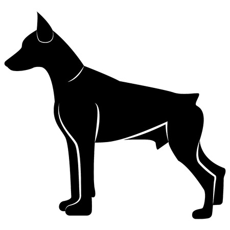 Vector image of dog silhouette of Doberman breed on white background