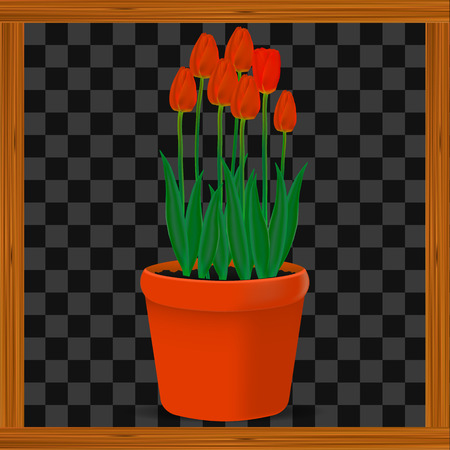 Vector, realistic image of red flowers tulips in a pot on a transparent background in a wooden frame Illustration