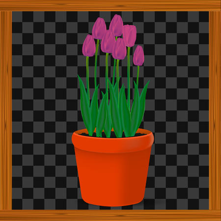 Vector, realistic image of pink flowers tulips in a pot on a transparent background in a wooden frame