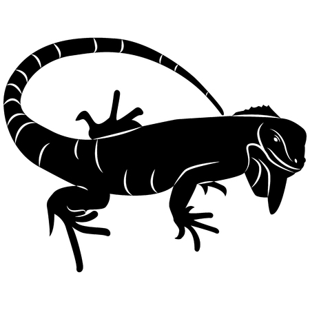 Vector image of silhouette of iguana lizard on white background