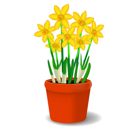Vector image of yellow flowers of daffodil in a pot Ilustração
