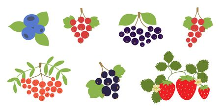 Rowan, currant, mountain ash, viburnum, blueberry, black chokeberry, strawberry, red and black currants. Vector berries set. Natural healthy food. Hand drawn fruit. Vegan menu. Vegetarianism Illustration