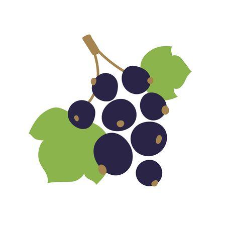 Black currant with leaves. Vector berry. Natural healthy food. Hand drawn fruit. Vegan menu. Vegetarianism
