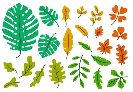Vector leaves set. Botanical doodle drawing illustration. Hand drawn sketch. Color exotic monstera leaf