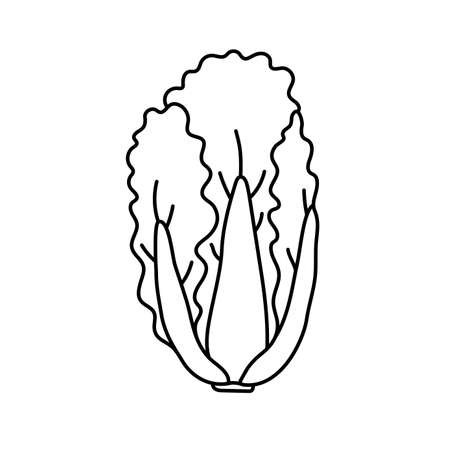 Chinese cabbage. Vegetable sketch. Thin simple outline icon. Black contour line vector. Doodle hand drawn illustration Vetores