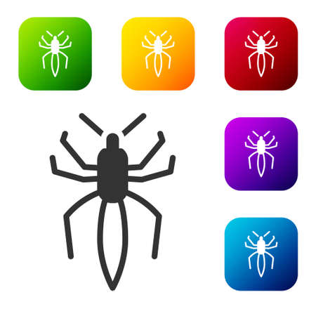 Black Spider icon isolated on white background. Happy Halloween party. Set icons in color square buttons. Vector.