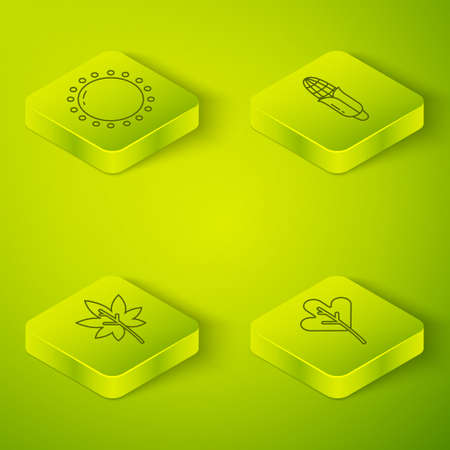 Set Isometric Corn, Leaf or leaves, Leaf or leaves and Sun icon. Vector