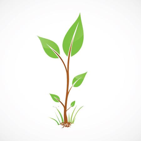 토양 벡터 일러스트와 함께 추상 에코 녹색 식물