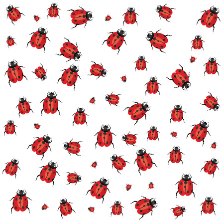 White background with small ladybugs. Vector Vectores