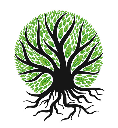 Green tree with root isolated in white background.