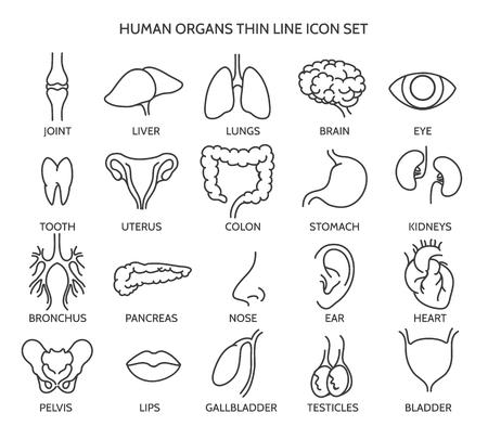 iconos de líneas de órganos. signos de órganos humanos o partes del cuerpo símbolos humanos. Los dientes y las líneas de cerebro, ojo iconos y símbolos del hígado. ilustración vectorial