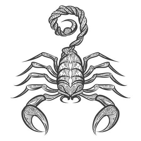 cartoon scorpion: Hand drawn scorpion with floral ornament