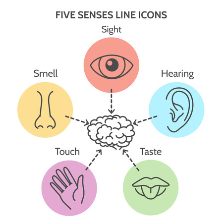 senses: Five senses line icons. Human ear and eye symbols, nose and mouth outline vector signs