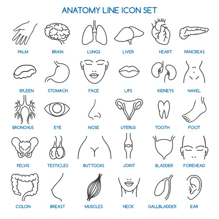 Anatomie lijn pictogrammen. Menselijke lichaamsdelen lijn pictogrammen en menselijke anatomie tekenen. Vector illustratie Stock Illustratie