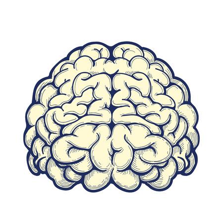 thalamus: Human brain hand drawn icon on white background. Vector illustration Illustration