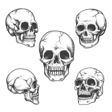 Hand drawn skulls. Skull vector Illustrations set 向量圖像