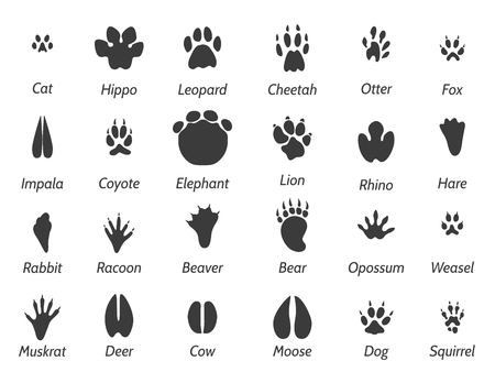 Wildlife animals black footprints set on white background with signs. Vector icons set