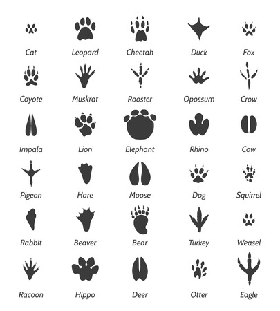 Animal tracks and bird footprints. Illustration