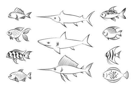 flounder: Painted fishes. Shark and swordfish, flounder and carp. Hand drawn fish set vector illustration