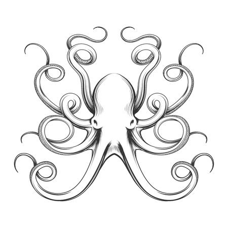 タコのベクトル図が刻まれています。白い背景で隔離の手描き下ろし巨大なタコ  イラスト・ベクター素材