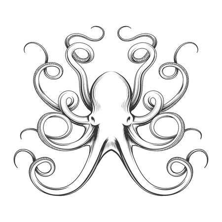 Engraved octopus vector illustration. Hand drawn giant octopus isolated on white background