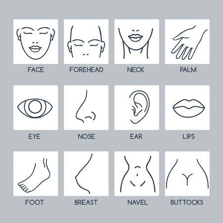 Las partes de los iconos de líneas de vectores del cuerpo humano