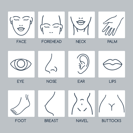 body parts: Parts of the human body vector line icons
