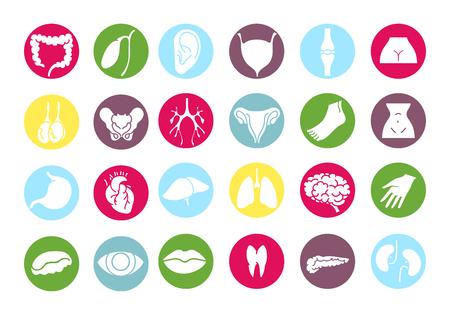intestino grueso: órganos internos humanos y partes del cuerpo de colores iconos conjunto de vectores Vectores