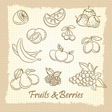 slow food: Popular hand drawn fruits and berries on vintage notebook page. Vector illustration