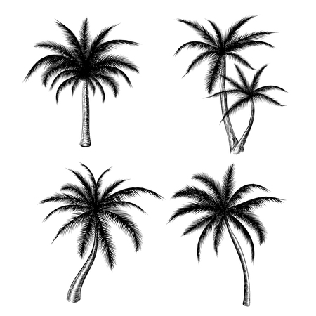 손으로 그려진 된 야자수 흰색 배경에 고립입니다. 벡터 휴가 손바닥 나무 스케치 여름 패션 디자인에 대한 설정