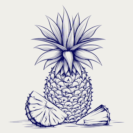 scratchy: Ball pen pineapple isolated on grey background. Sketch pineapple vector illustration Illustration