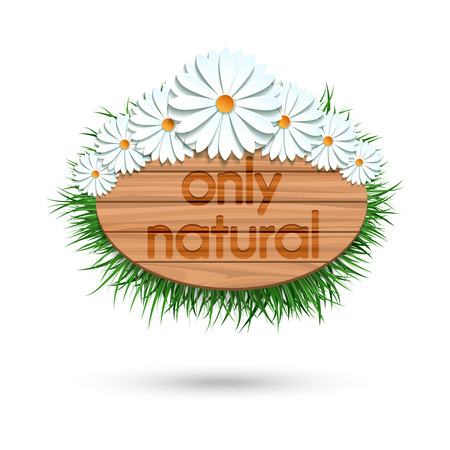 Wood panel banner with camomile bouquet and grass isolated on white. Vector illustration Illustration